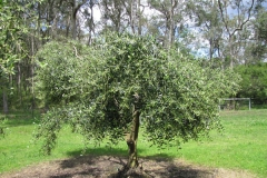hunter-valley-olive-oil-products