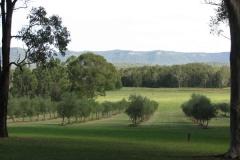 hunter-valley-olives-shalumar