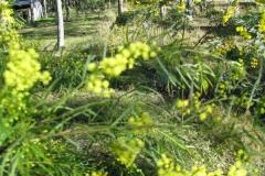 hunter-valley-olives