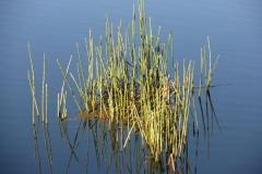 shalumar_olive-grow-dam